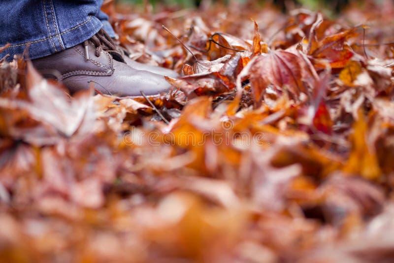 Piernas y pies del niño que se colocan en hojas de otoño fotos de archivo libres de regalías