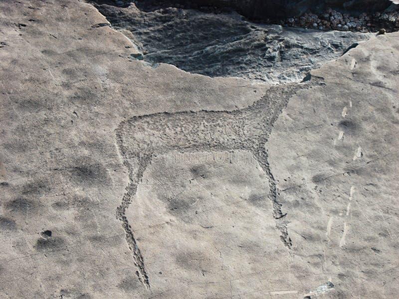 Pierre avec la pétroglyphe d'animal sauvage image stock