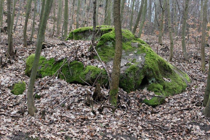 Pierre dans la forêt photo stock