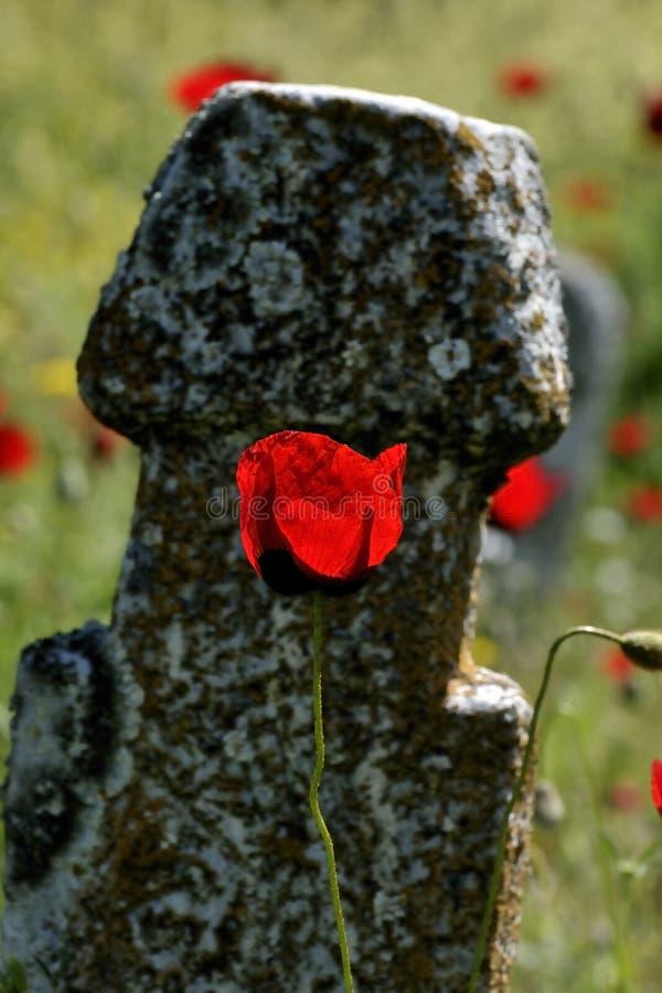 Pierre de cimetière et fleur de pavot image libre de droits