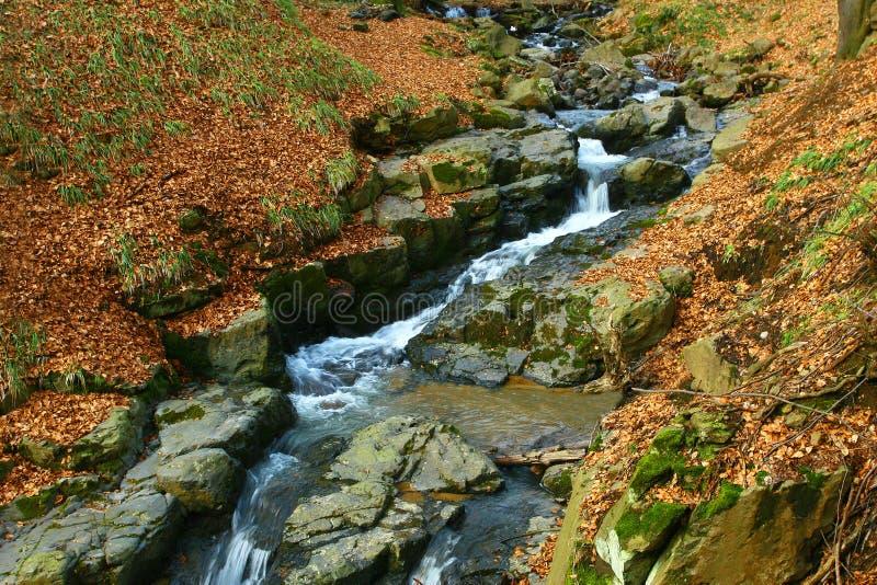 Pierre de cuvette de coupure de vallée - forêt d'automne. images libres de droits