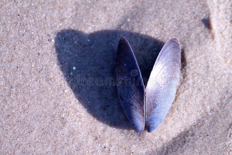 Pierre de mer sur le sable de plage images libres de droits
