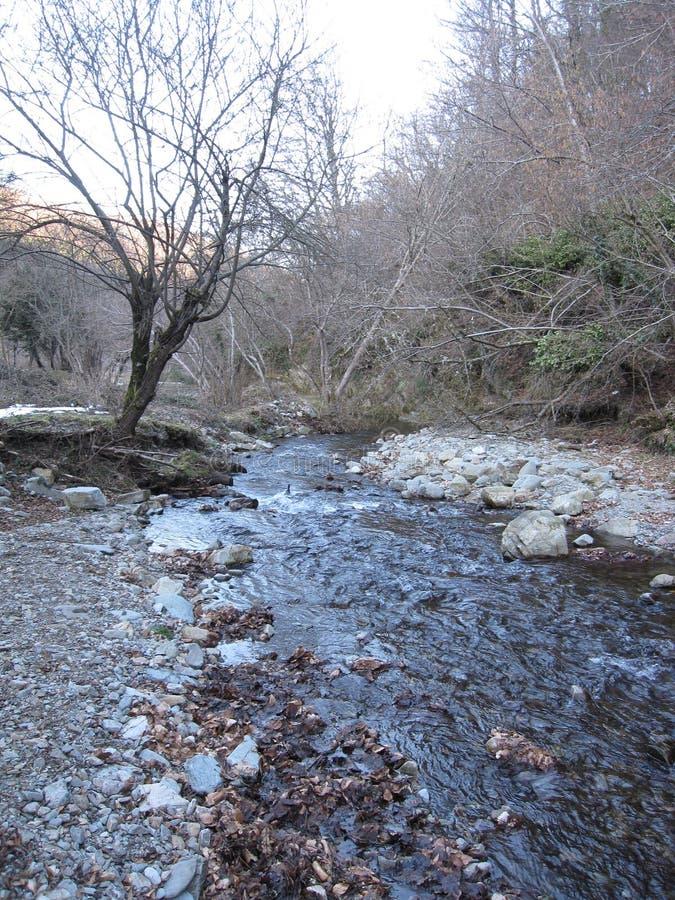Pierre et arbres de nature de rivière photo libre de droits