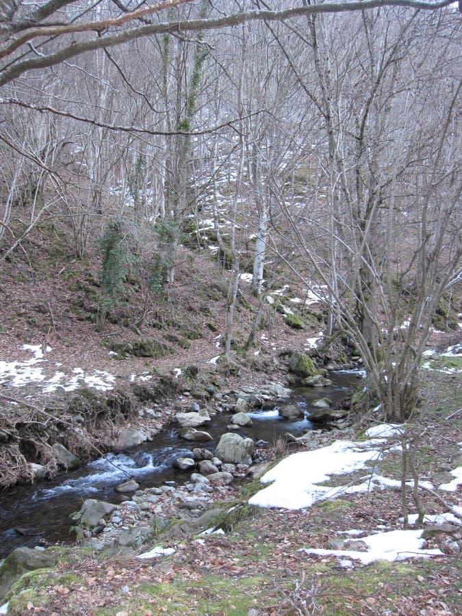 Pierre et arbres de nature de rivière en hiver image libre de droits