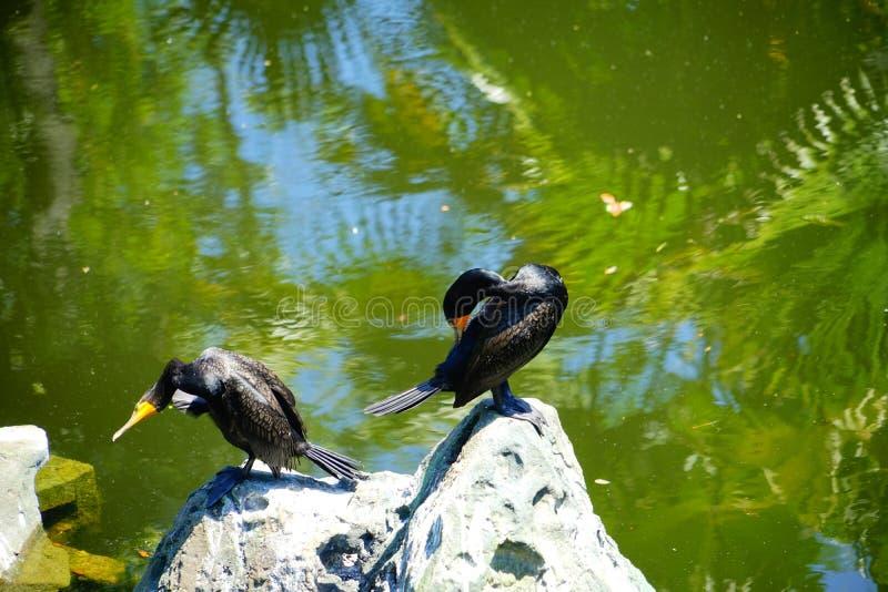Pierre et oiseau noir photos libres de droits