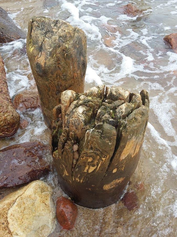 Pierre, l'eau, bois dans Svetlogorsk, la mer baltique photo stock