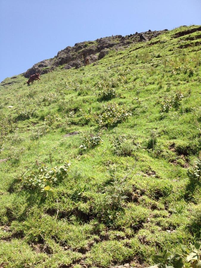 Pierre merveilleuse sur la montagne verte photo libre de droits