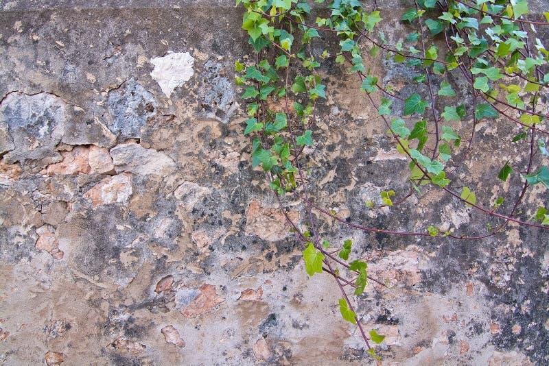 Pierre ou mur abstrait en béton de fond images stock