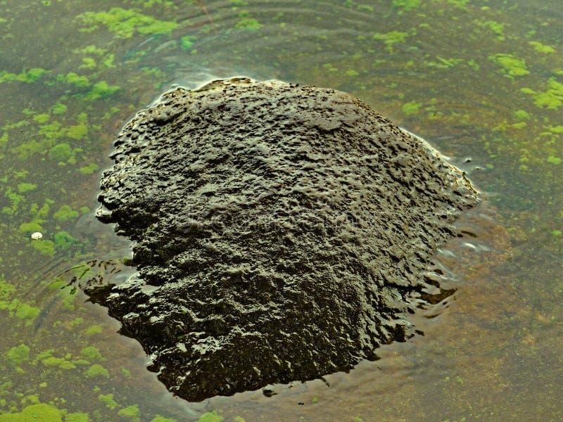 Pierre texturisée dans l'eau toxique avec des algues images libres de droits