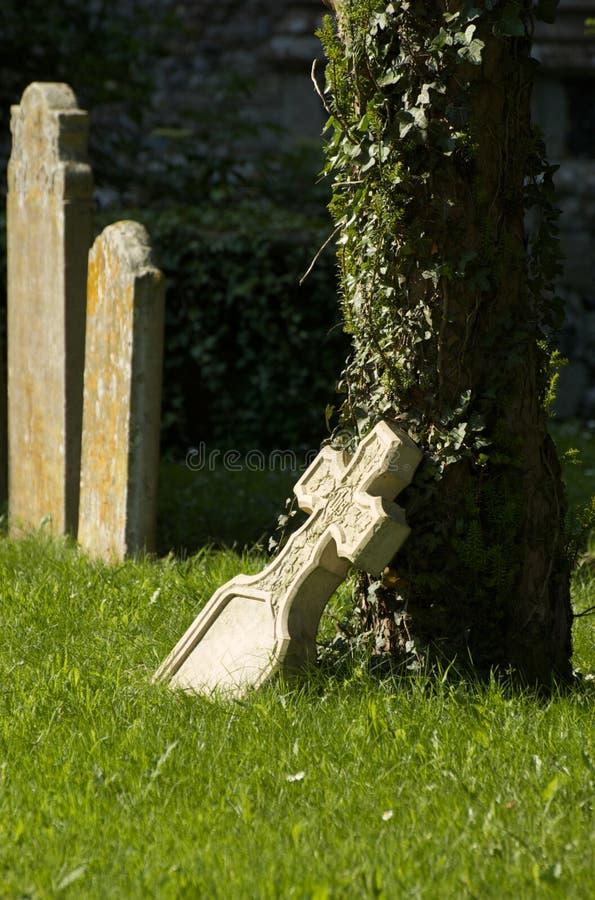 Pierre tombale se penchant sur un arbre plaqué de lierre image stock