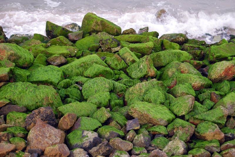 Pierres couvertes de seawee images stock