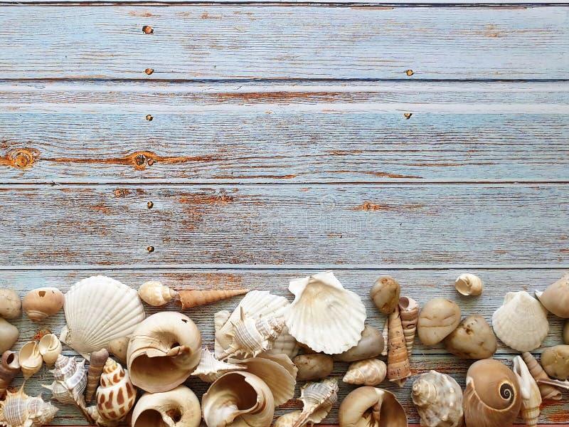 Pierres de coquillage et de mer sur le fond bleu en bois avec le fond rose blanc de concept de fleurs photo stock