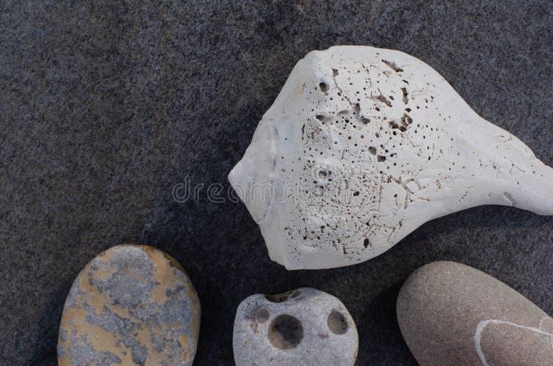 Pierres de coquillage et de plage sur Gray Rock photos stock