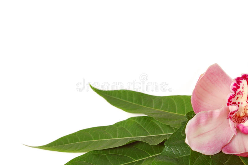 Pierres de station thermale avec l'orchidée rose image libre de droits
