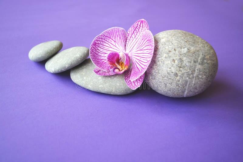 Pierres de station thermale et fleur d'orchidée photographie stock