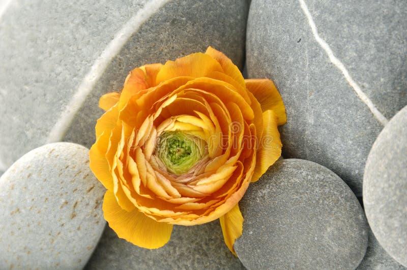 Pierres et fleur photographie stock libre de droits