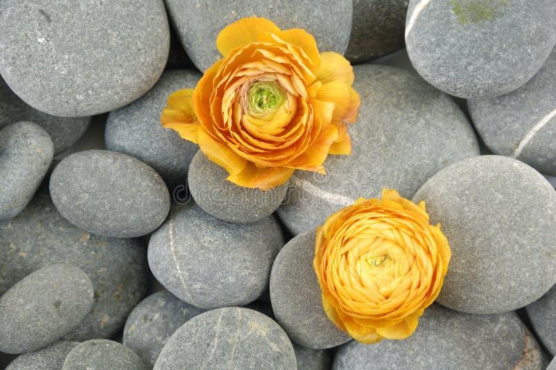 Pierres et fleur image stock