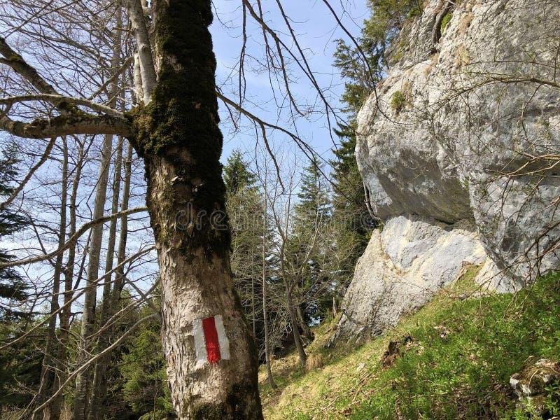 Pierres et roches de la montagne maximale Rigi de Vitznauerstock ou de Gersauerstock image libre de droits