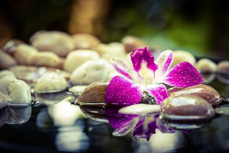 Pierres roses de station thermale d'orchidée avec la réflexion de l'eau photographie stock libre de droits