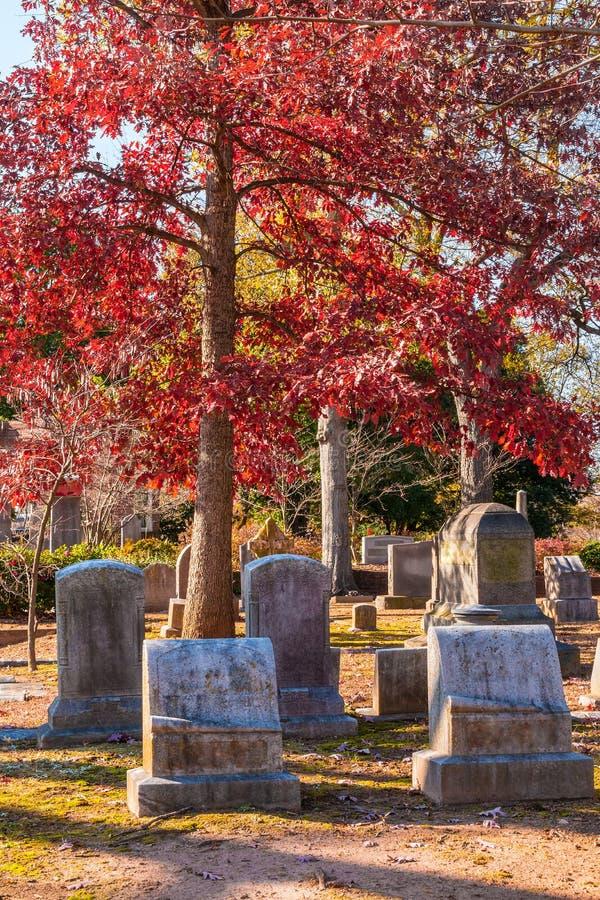 Pierres tombales et chêne rouge sur le cimetière d'Oakland, Atlanta, Etats-Unis photos stock