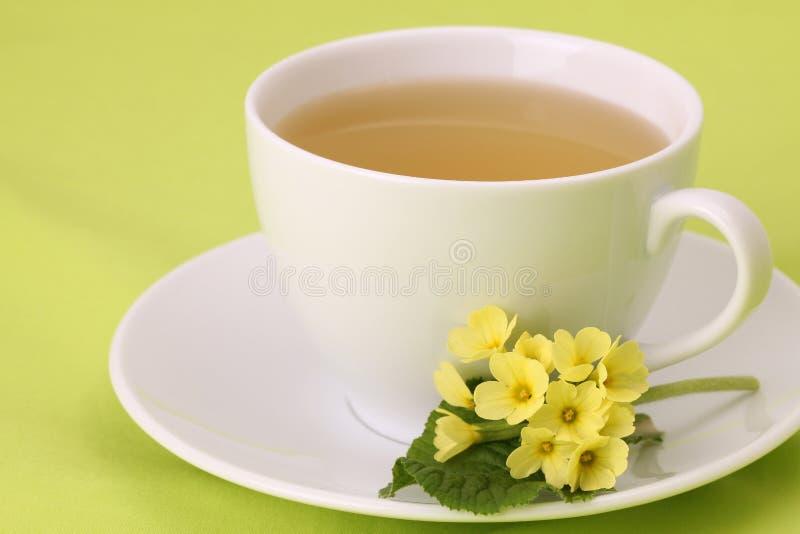 pierwiosnkowa herbata obrazy stock