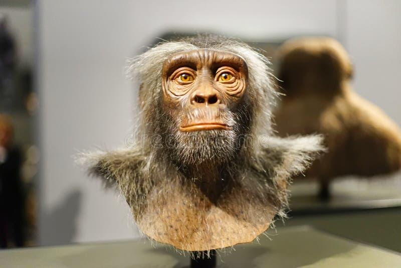Pierwotny mężczyzna małpy Prehistoria antenat fotografia royalty free