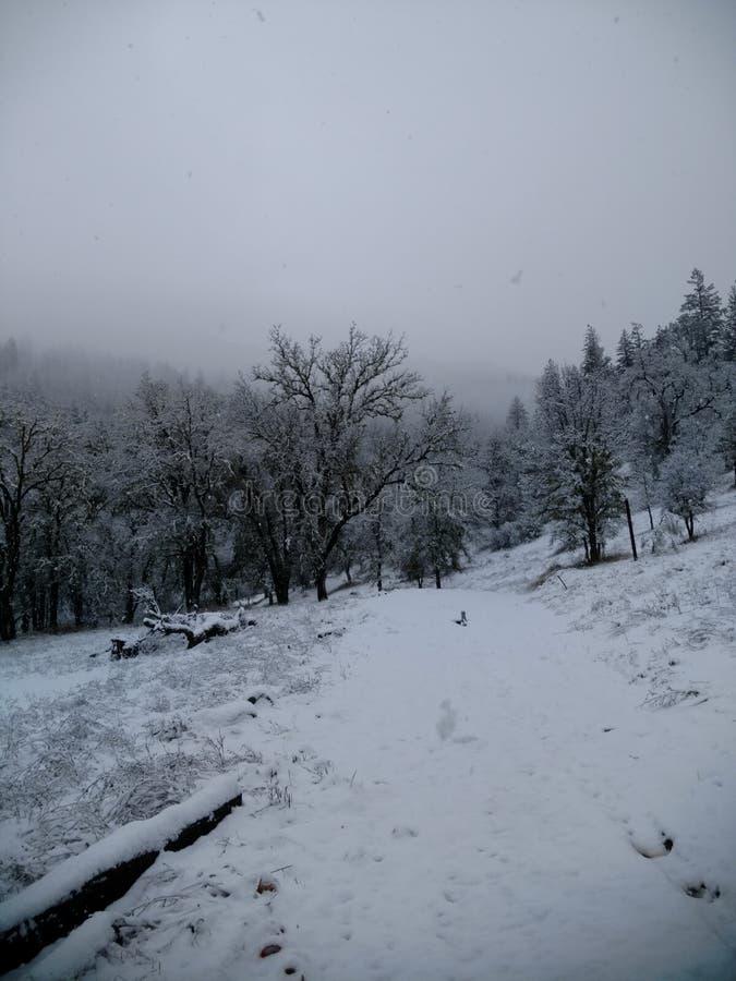 pierwszy śnieg fotografia royalty free
