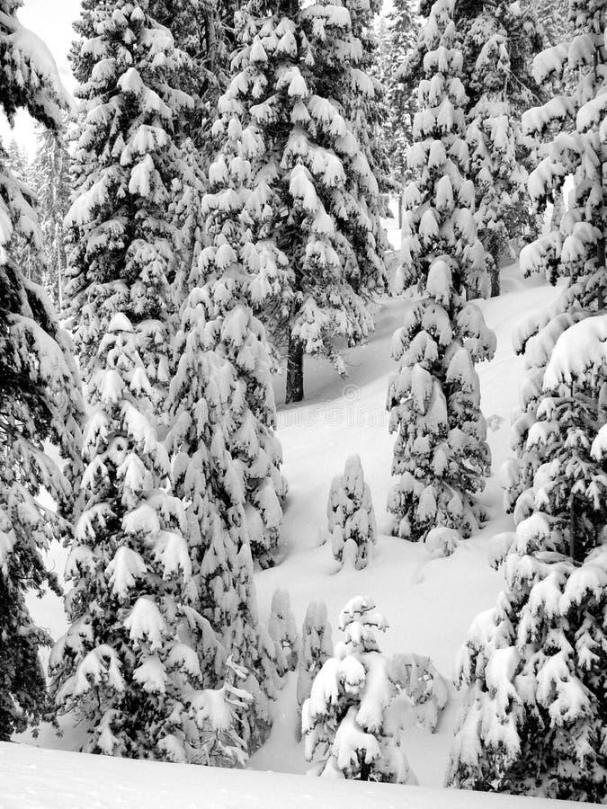 pierwszy śnieg obraz stock