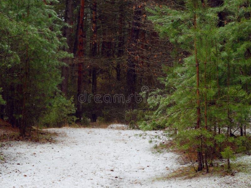 Pierwszy śnieg na ścieżce w ciemnym lesie obrazy stock