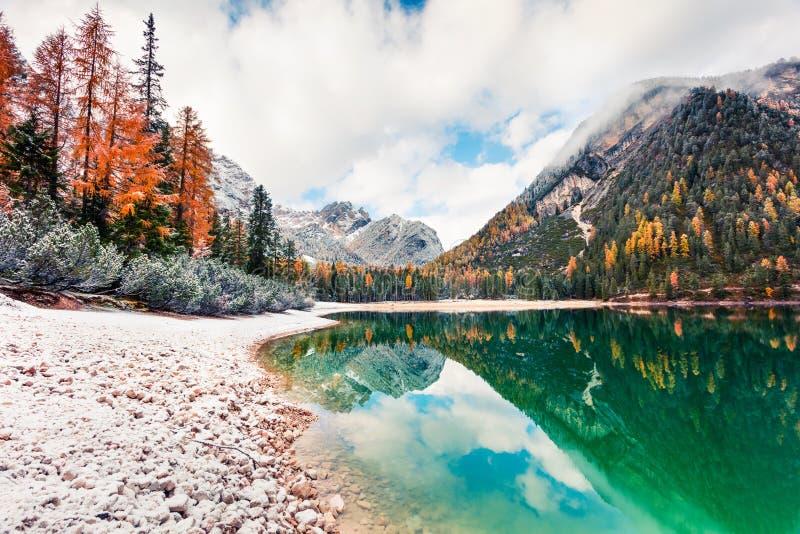 Pierwszy śnieg nad jeziorem Braies Kolorowy krajobraz jesienny w Alpach Włoskich, Naturpark Fanes-Sennes-Prags, Dolomit, Włochy,  zdjęcie royalty free