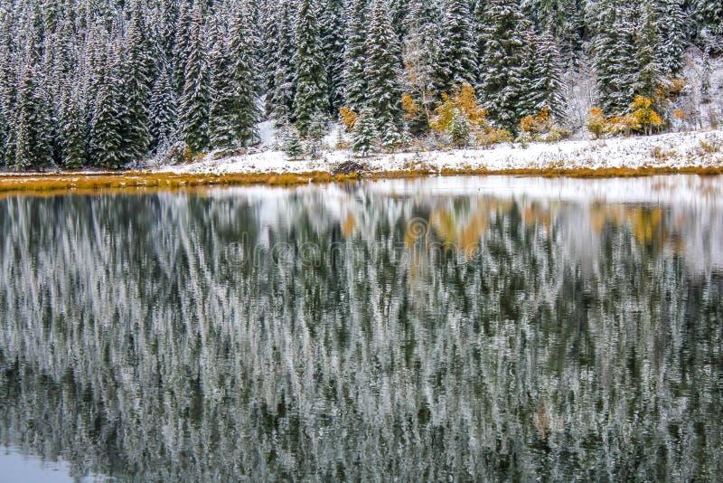 Pierwszy śnieg odbijający w Sibbald stawie obrazy stock