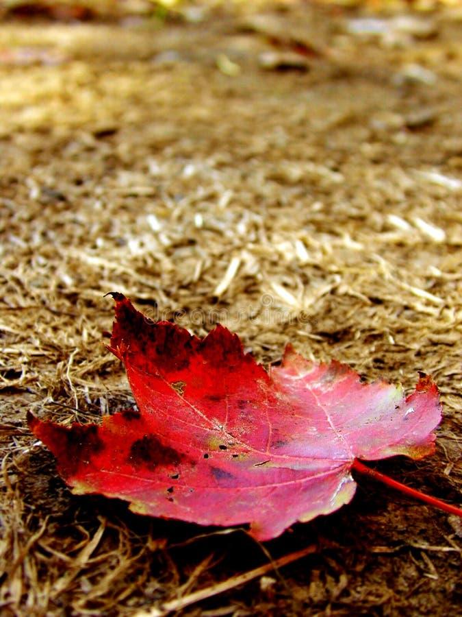 Pierwszy Dzień Jesieni Obraz Royalty Free