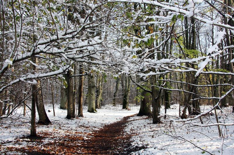 Pierwszy październikowy śnieg pokrył aleje zdjęcia royalty free