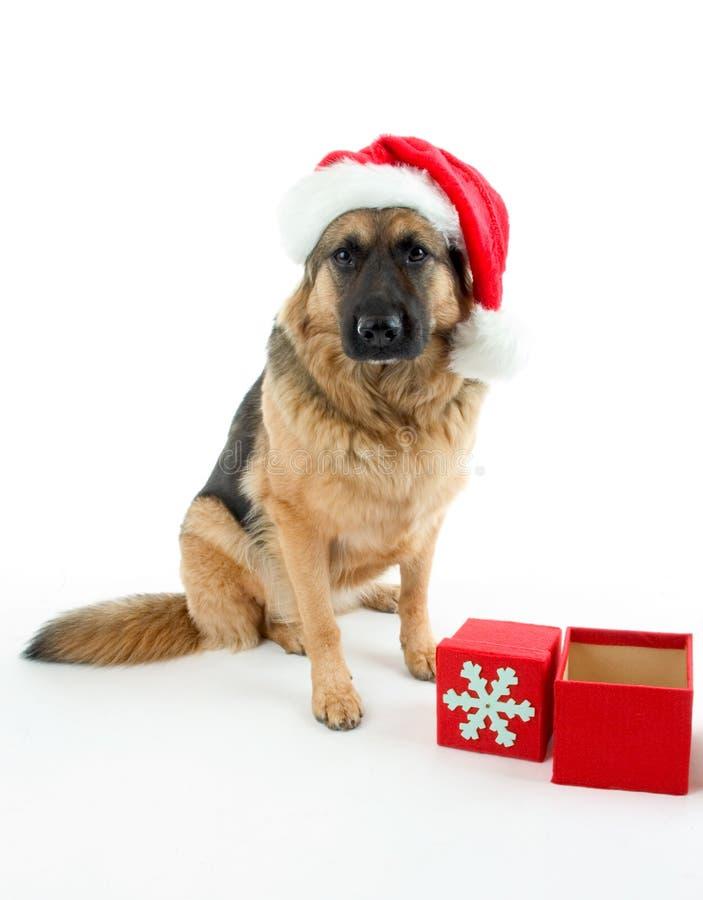 pies świąteczne obrazy stock