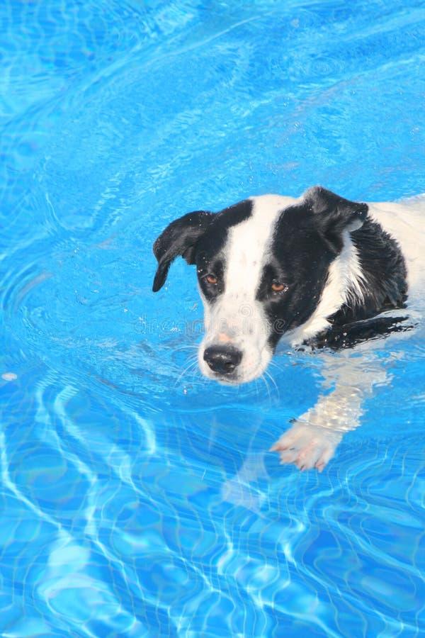 pies, zdjęcia royalty free