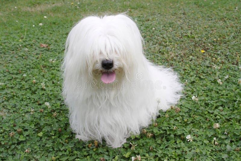 pies. obraz royalty free
