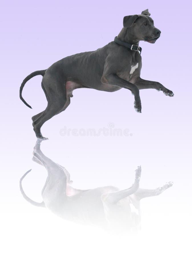 Download Pies. zdjęcie stock. Obraz złożonej z kieł, spłodzony - 3887650