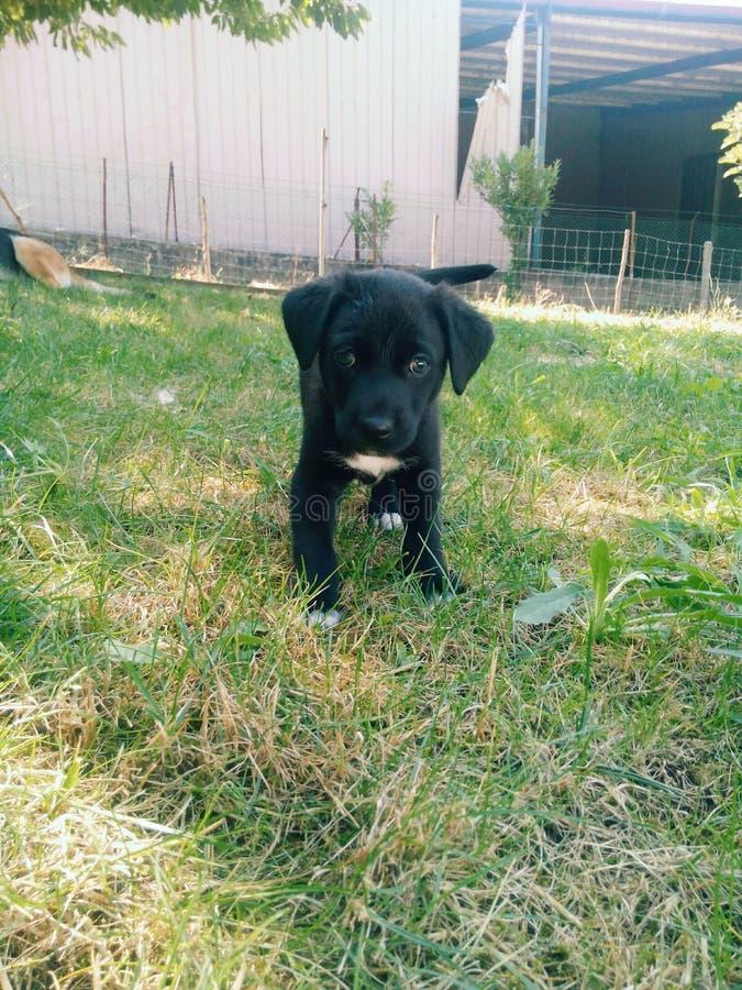 Pies zdjęcie royalty free