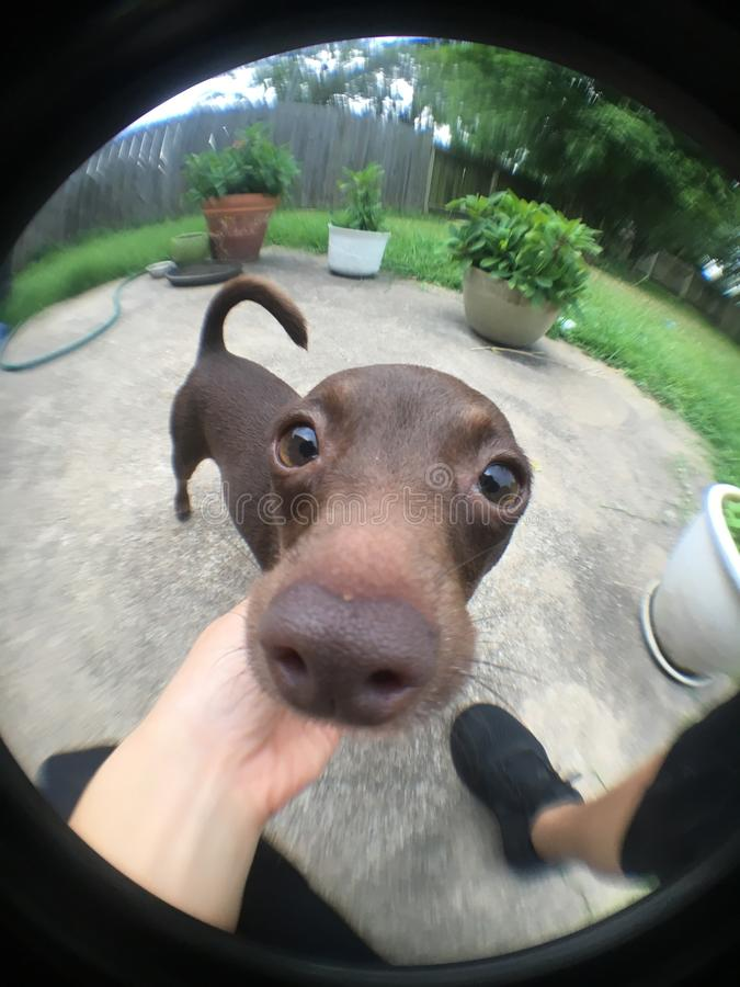 Pies obraz stock