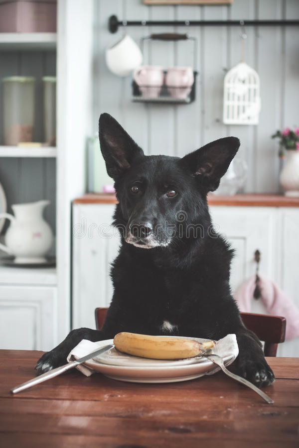 Pies, banan zdjęcie royalty free