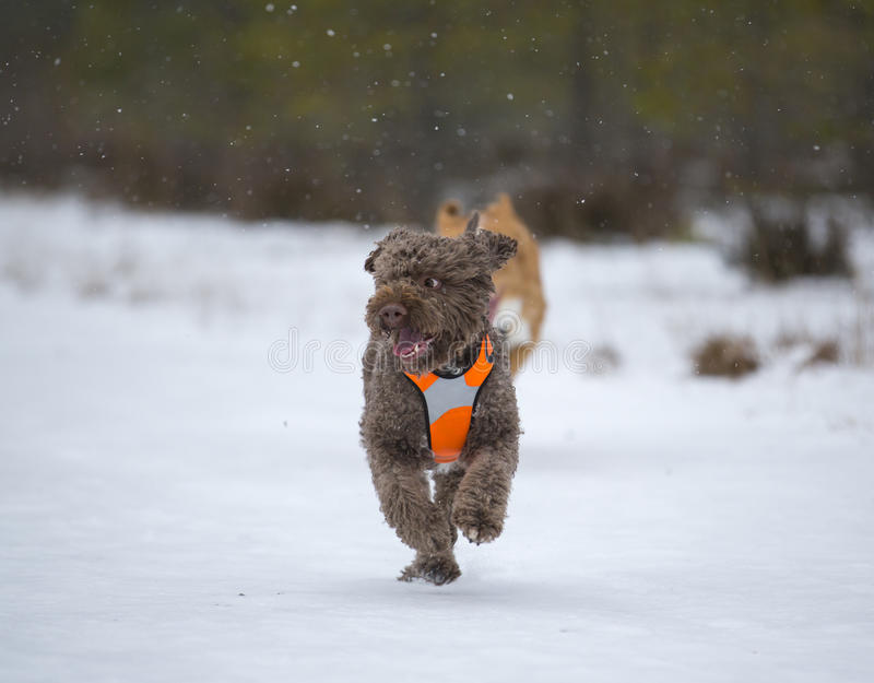 Pies biega w śniegu obraz royalty free