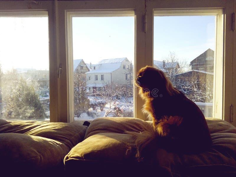 Pies blisko okno zdjęcie royalty free