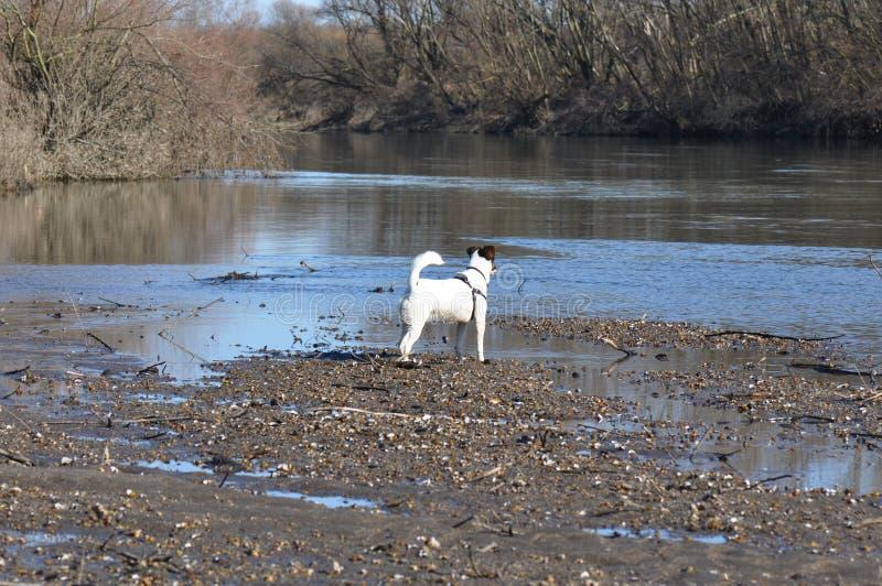 Pies blisko rzeki zdjęcie stock