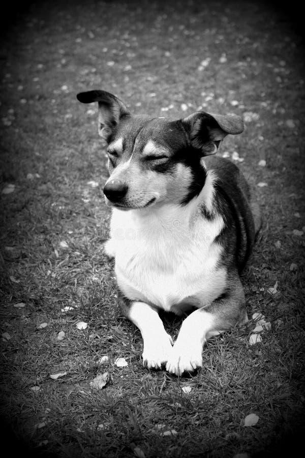 Pies, czarny i biały wizerunek obraz royalty free