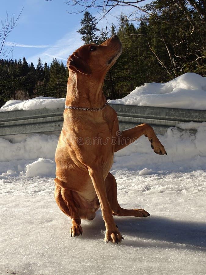 Pies daje łapie zdjęcia stock