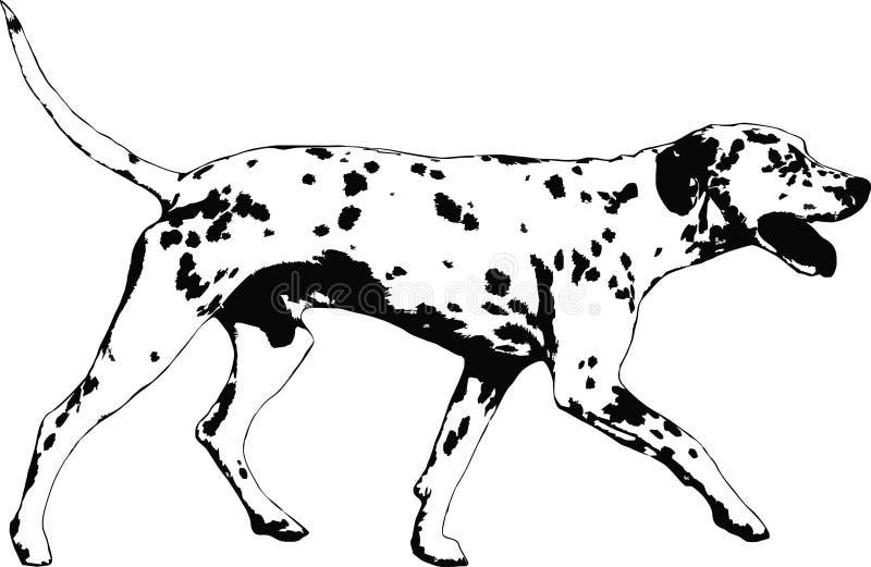 pies dalmatian ilustracja wektor