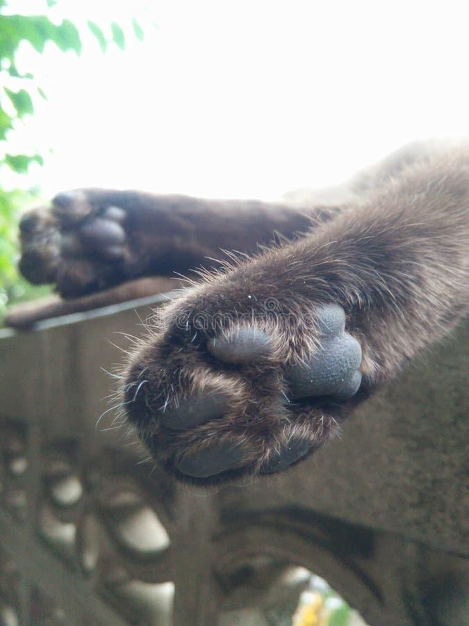 Pies de gato macros fotografía de archivo libre de regalías