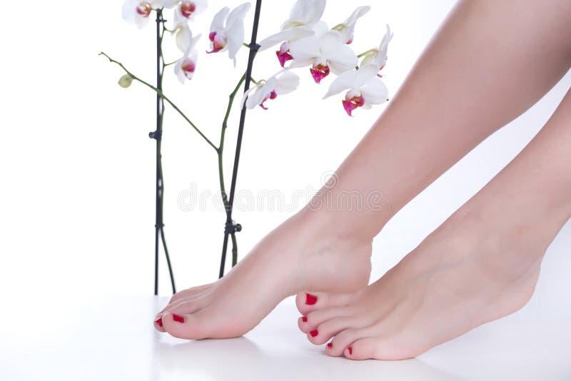 Pies de la muchacha con el pulimento de clavos rojo en las flores blancas del fondo y de la orquídea en belleza y estudio del bal fotos de archivo