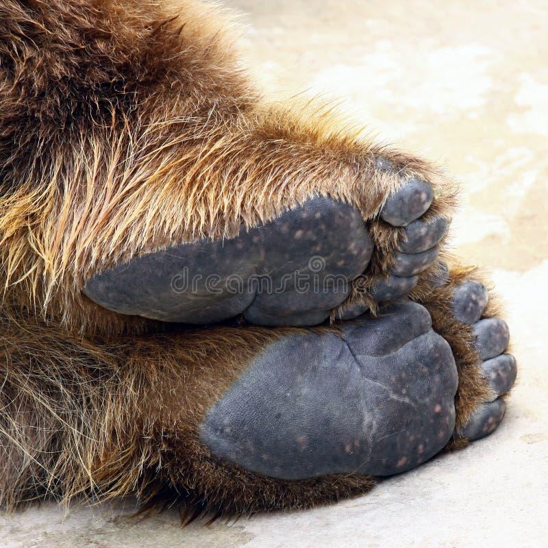 Pies del oso imagenes de archivo