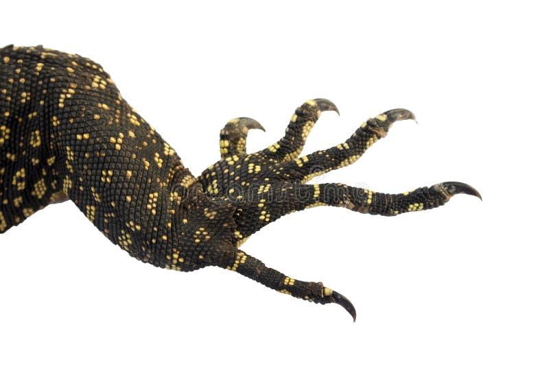 Pies del reptil con las garras aisladas con las trayectorias de recortes en un fondo blanco fotografía de archivo libre de regalías